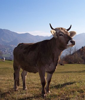 Cow, Mountain, Prato, Landscape, Statue
