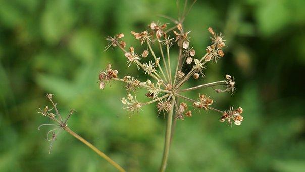 Autumn, Fallen Seeds, Spindle, Plant