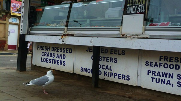 Seagull, Bird, Regular, Customer, Fish, Store, Comical