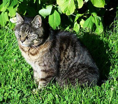 Brown-gray Cat, Tabby Kitten, Pets