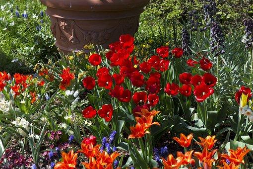 Spring Flowers, Tulips, Red, Orange Vibrant, Hyacinth