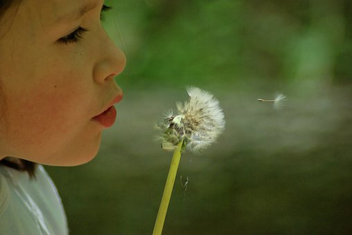 Dandelion, Egret Dandelion, Nature, Vow, Child