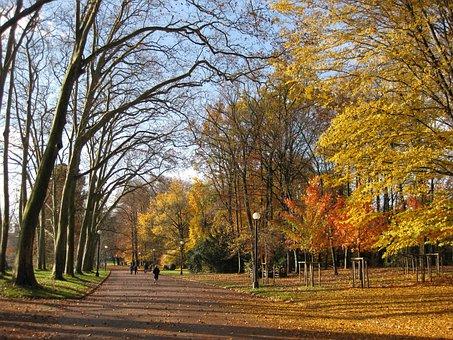 Autumn, Park, Lyon, Parc De La Tête D'or, Autumn Leaves