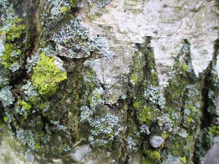 Weave, Birch, Bark, Romanshorn, Moss, Log, Wood