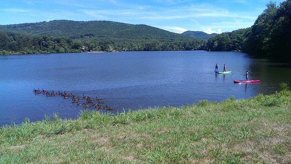 Lake, Biltmore, Geese, Paddle, Boards