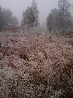 Grass, Frost, Bureå, Mist