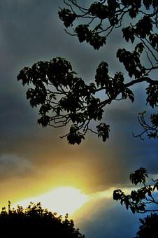 Sky, Clouds, Sunset, Light, Glow, Diffused, Tree