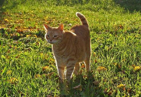 Cat, Pet, On The Grass, Foliage, Autumn, Into The Sun
