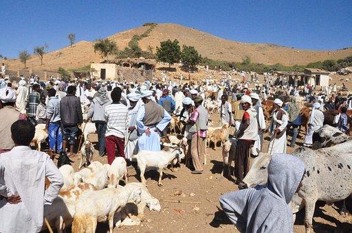 Animal Market, Eritrea, Keren