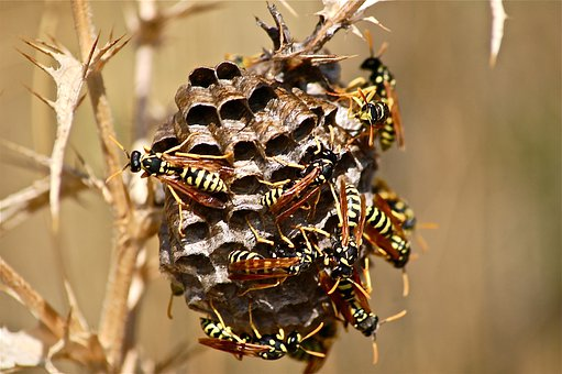 It Wasp Swarm, Diaper, Insect, Nature