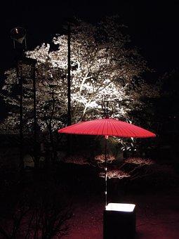 Japan, K, Castle, Night, Cherry Blossoms