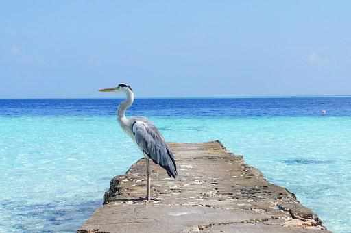 Heron, Sea, Nature, Bird, Wildlife, Ocean, Beach, Blue