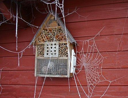 Spider Webs, Winter, Frozen Cobwebs, Frost, Ripe