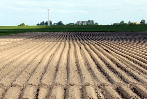 Potato Cultivation, Arable, Cultivation, Symmetry
