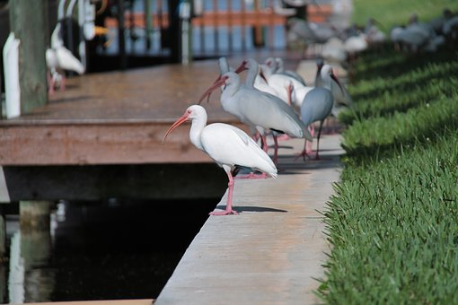 Florida, Birds, Atmosphere, Bird, Water, Nature, Sea