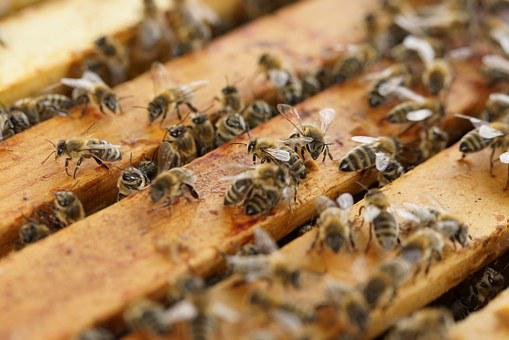 Beehive, Bees, Insect, Honey Bees, Honey, Hive