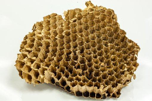 Wasps, Honeycomb, Honey, Bees, Nature, Flowers, Beehive