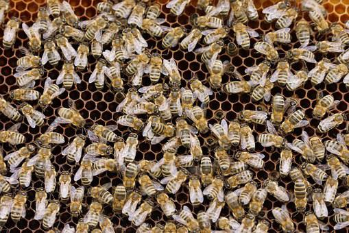 Bees, Combs, Insect, Beehive, Nature, Honey, Beekeeper
