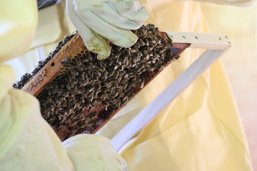 Bees, Beekeeper, Honey, Nature, Beehive, Insect