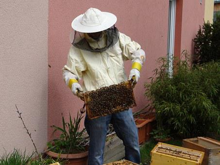 Beekeeper, Honey, Beekeeping, Honey Bees, Bees, Food