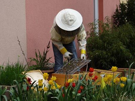 Beekeeper, Bees, Human, Honey, Honey Bees, Beehive
