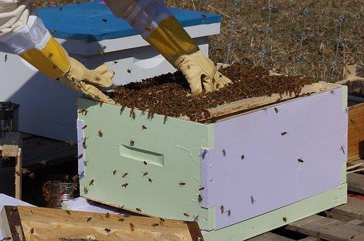 Beekeeping, Bees, Honey, Frames, Nature, Honeycomb