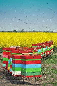 Ule, Bees, Summer, Beekeeping, Wooden Beehives