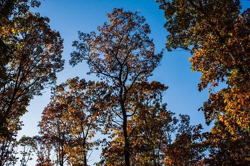 Autumn, Trees, Sky, Blue, Forest, Golden Autumn