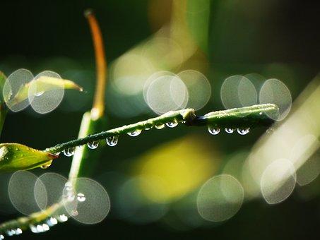 Branches, Bud, Morgentau, Raindrop, Bokeh, Green