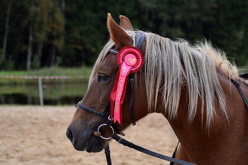 Horse, Equestrian, Brown, Ribbon, Portrait, Chestnut