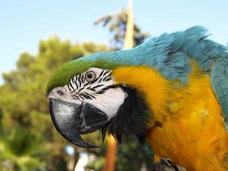Parrot, Bird, Ara, Animal, Spring, Bill, Colorful