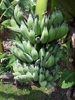 Bananas, Fruits, Green, Unripe, Raw, Foods, Edible