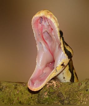 Snake, Foot, Python, Yellow, Hunger, Macro, Pattern