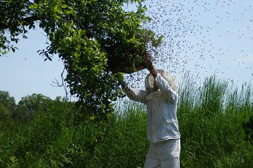 Hive, Bees, Honey Bees, Beekeeping, Insect, Beehive