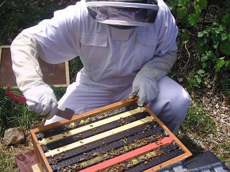 Hive, Apis, Mellifera, Bee, Beekeeping, Honey, Apiary
