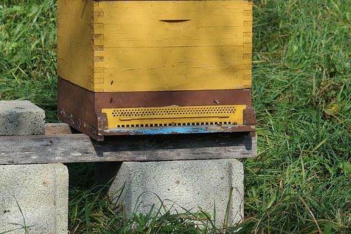 Beehive, Bees, Insect, Honey, Beekeeper, Honey Bees