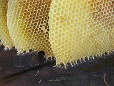 Honey, Honeycomb, Bees, Wax, Beehive, Hive, Sting