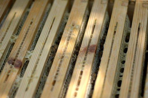 Honey, Frame, Bees, Descargar Honey, Honeycomb