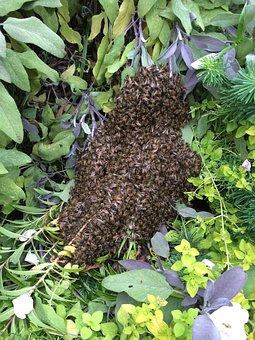 Honeybee, Beehive, Bee-house, Forest, Swarm, Wild