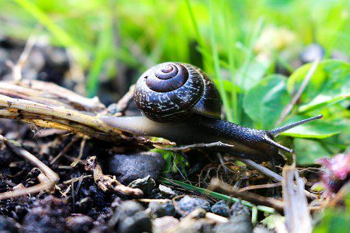 Snail, Nature, Garden, Summer, Small, Slow, House