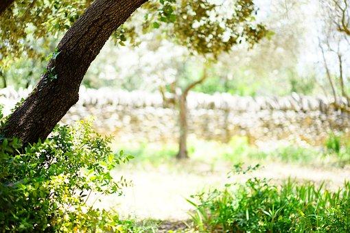 Ilex, Tree, Landscape, Idyll, Wall, Stone Wall