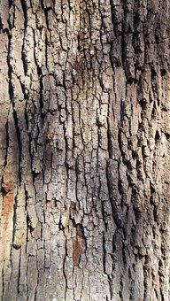 Live Oak Tree, Bark, Brown, Grey, Texture, Oak, Nature