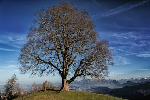 Tree, Nature, Mood, Landscape, Seasons, Trees Sleeping