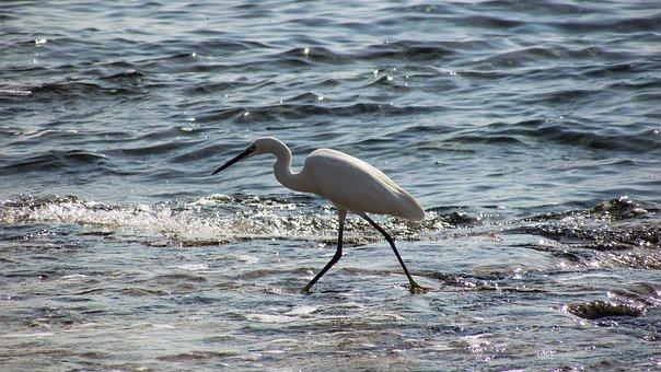 Heron, Bird, Animal, Wildlife, Nature, Sea, Beach