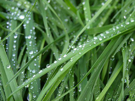 Dew, Grass, Nature, Green, Dewdrop, Drop Of Water, Wet