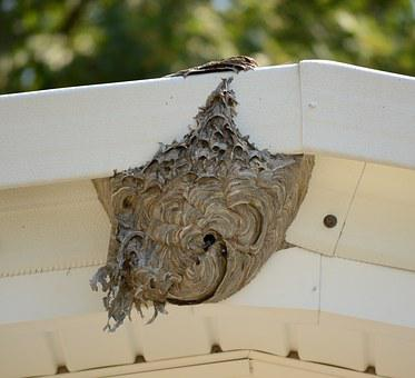 Hive, Bee, Nest, Honey, Insect, Nature, Beekeeping