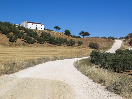 Farmhouse, Bed And Breakfast, Path, Olive Trees, Trail