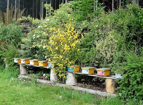 Bee Nursery, Beehives, Oplodňáčky