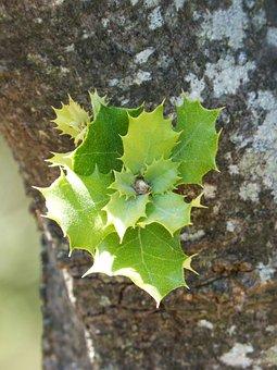 Outbreak, Encina, Carrasca, Tender Leaves, Sprout