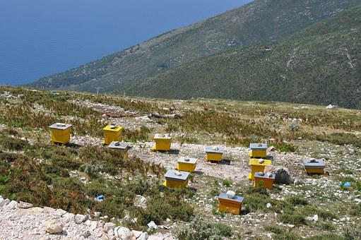 Albania, Beehives, Apiculture, Europe, Outdoor